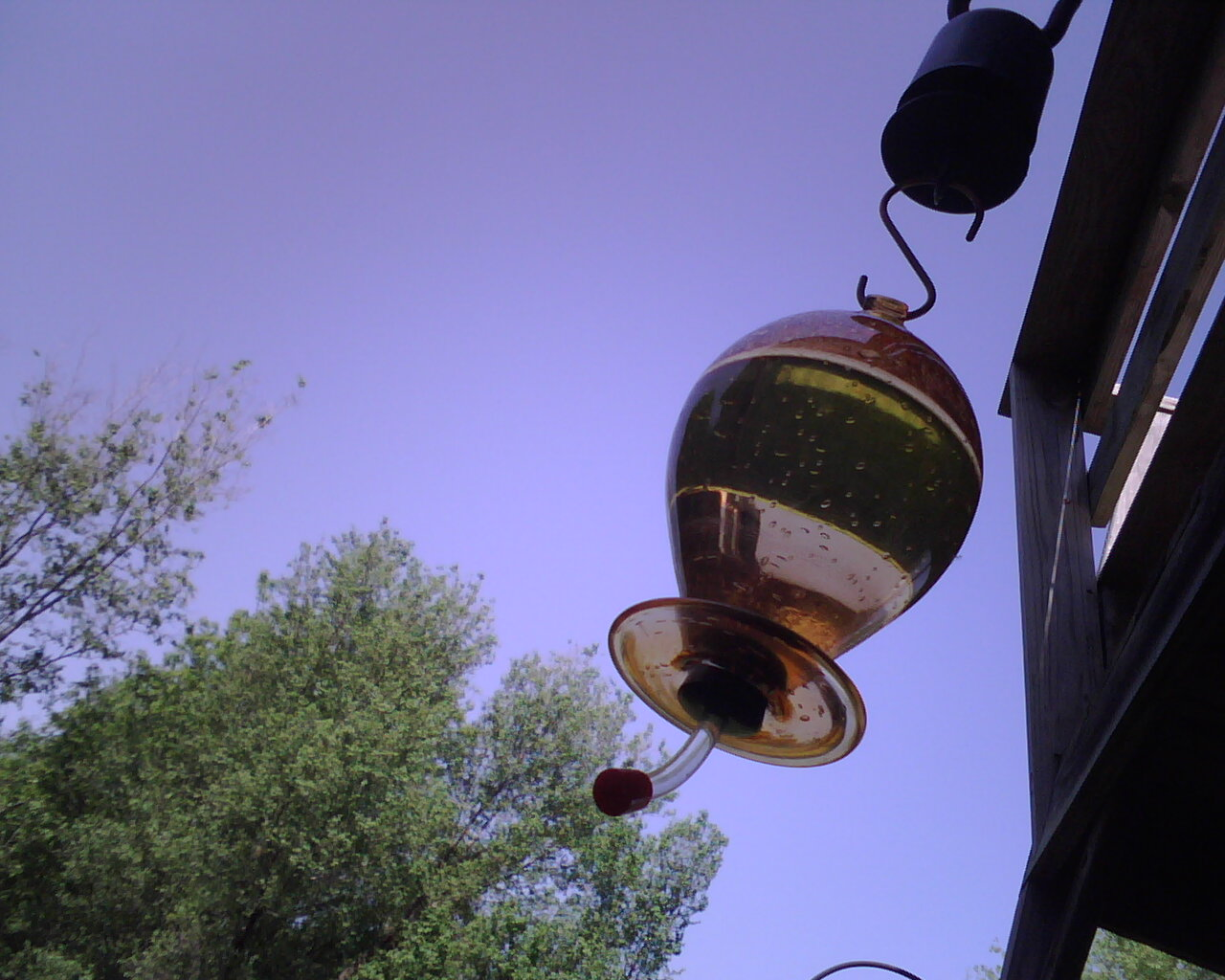Waiting for hummingbirds